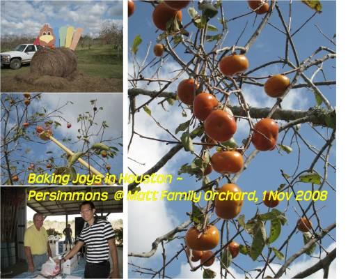 matt-orchard